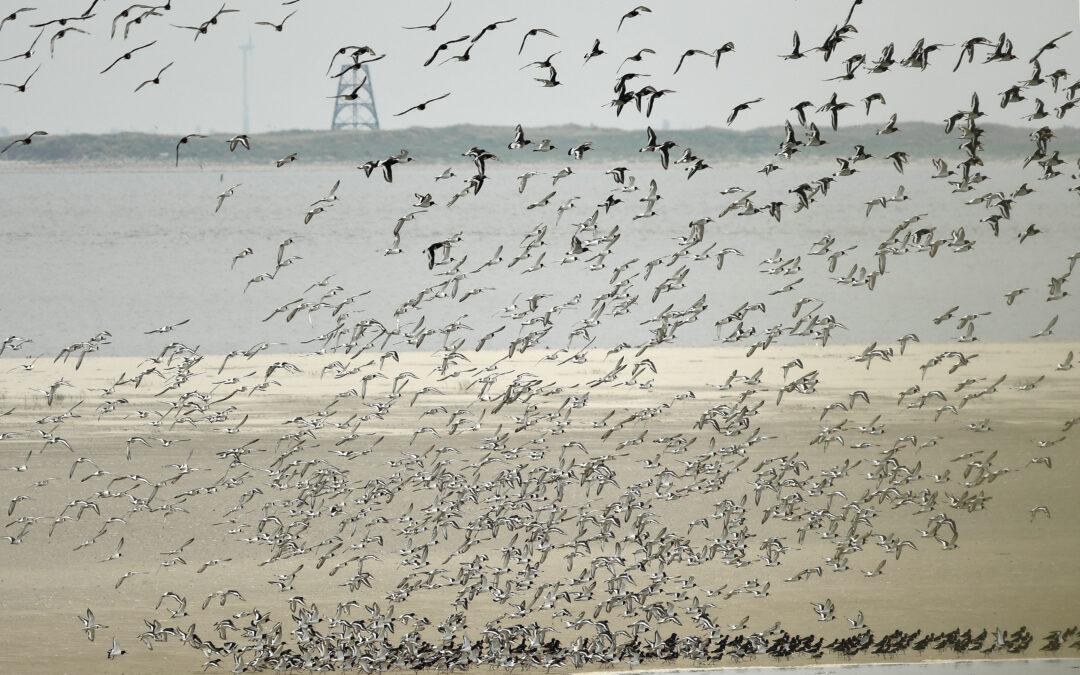 Vogelwachtersdagboek op Rottumerplaat
